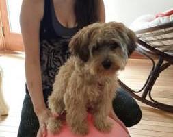 Photo #1: SmartK9 Professional Dog Training