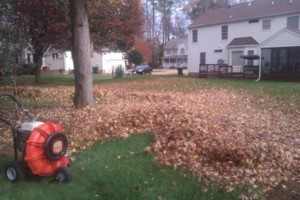 Photo #2: Vottero Landscape. Schedule Your FALL LEAF CLEANUPS Today... Professional & Affordable!