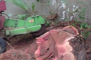 Photo #1: Stump Grind, tree trimming and landscape
