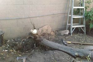 Photo #6: Stump Grind, tree trimming and landscape