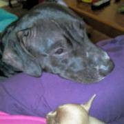 Photo #8: Alicia's All N One Animal Care! Dog walking, Pet sitting, Dog grooming
