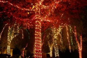 Photo #3: CHRISTMAS LIGHTING INSTALLATIONS