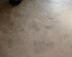 Photo #2: DVA Carpet Cleaning in Los Angeles