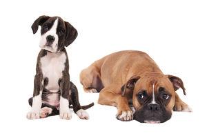 Photo #1: Pet Portraits