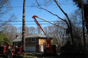 Photo #11: BULLDOZING, TREE REMOVAL ETC
