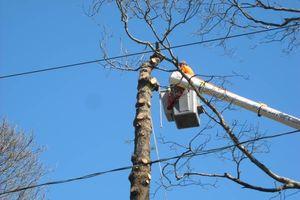 Photo #9: BULLDOZING, TREE REMOVAL ETC