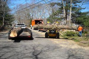 Photo #8: BULLDOZING, TREE REMOVAL ETC