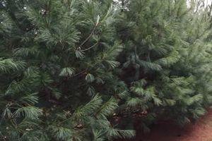 Photo #2: BULLDOZING, TREE REMOVAL ETC