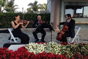 Photo #2: Bravo String Quartet, Violinist for Weddings and other Special Occasions