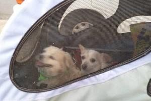 Photo #1: Special needs dog care