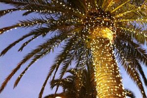 Photo #5: Holiday Lighting