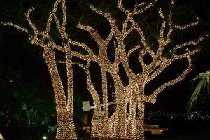 Photo #4: Holiday Lighting