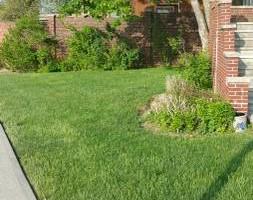 Photo #1: Alfredo's Lawn Care