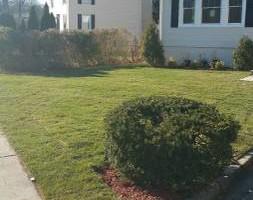Photo #4: Alfredo's Lawn Care