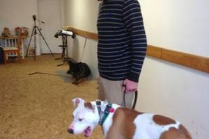 Photo #9: Premium Dog Training services