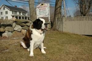 Photo #12: Premium Dog Training services