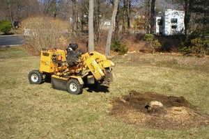 Photo #1: Tree Stump Grinding/Stump Removals. Quality work done at a fair price!