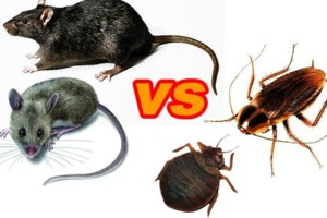 Photo #1: AFFORDABLE EXTERMINATOR - BED BUGS/Roach/Rodent problems