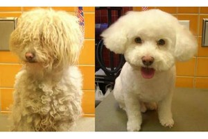 Photo #1: Full Set Grooming Specials $35