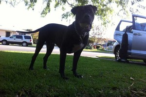 Photo #1: Dog walker/ pet sitter