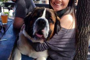 Photo #1: Dog Sitter/Walker!!