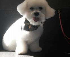 Photo #1: Barks and Bubbles Mobile Dog Grooming