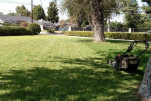 Photo #3: Yard maintenance. Sprinkler and timer setting/repair