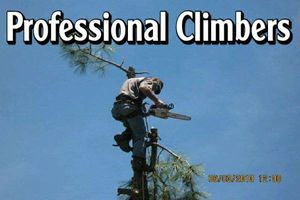 Photo #2: Falls the time to prune your trees! Call us for a free estimate!