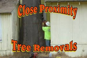 Photo #3: Falls the time to prune your trees! Call us for a free estimate!