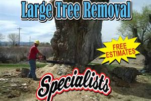 Photo #4: Falls the time to prune your trees! Call us for a free estimate!