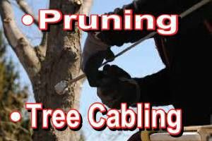 Photo #5: Falls the time to prune your trees! Call us for a free estimate!