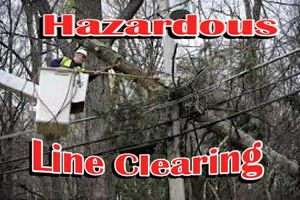 Photo #6: Falls the time to prune your trees! Call us for a free estimate!