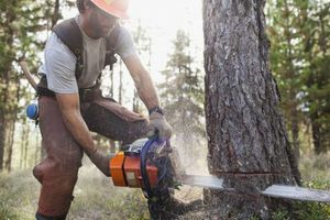 Photo #8: Falls the time to prune your trees! Call us for a free estimate!