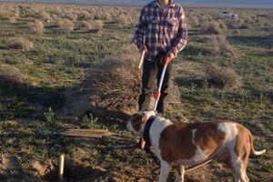 Photo #5: Personalized dog walking service
