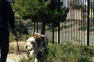 Photo #3: Personalized dog walking service