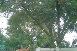 Photo #1: I Trim Tree's
