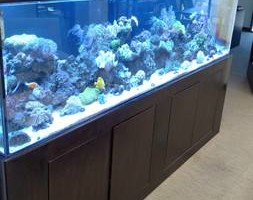 Photo #2: Reef Playground. Aquarium Service Co.
