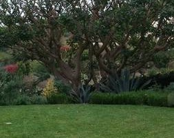 Photo #7: Garcia Landscape Maintenance/ Tree Service/ Irrigation