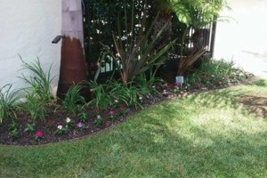 Photo #6: Garcia Landscape Maintenance/ Tree Service/ Irrigation