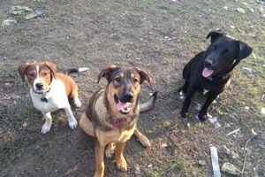 Photo #2: Basic dog training