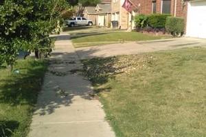 Photo #1: Bush,Trash & Junk Removal