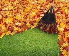 Photo #1: Lewis Landscaping & Design. Leaf Fall Clean Up