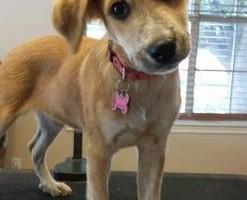 Photo #2: Dog Grooming Salon