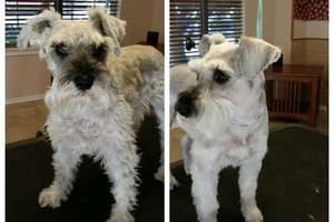 Photo #3: Dog Grooming Salon