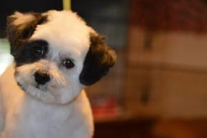 Photo #6: Dog Grooming Salon