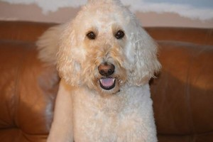 Photo #7: Dog Grooming Salon