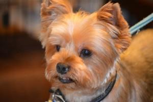 Photo #9: Dog Grooming Salon