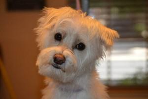 Photo #10: Dog Grooming Salon