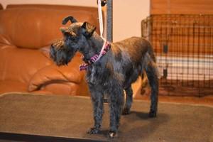 Photo #11: Dog Grooming Salon