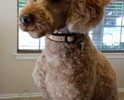 Photo #13: Dog Grooming Salon